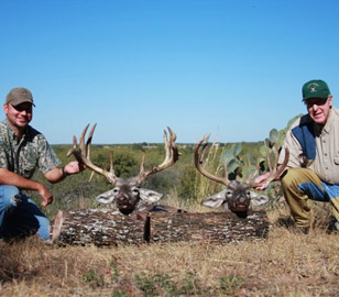 Best Whitetail Deer Hunting Packages In Texas Aforrdable